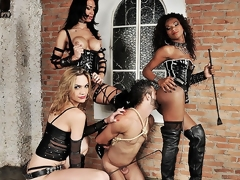 Three spectacular ts dommes are in bdsm action today. Watch the breathtaking boss bitches Adelaide Novaes, Cybelli Calmon and Jennifer Satine take total control of their submissive slave. These three take turns wrecking his mouth and ass in this intense hardcore domination scene.